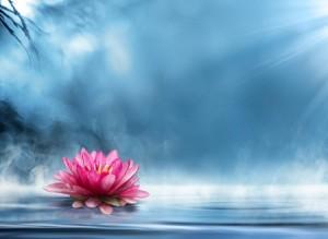 lotus zen spiritual healing